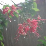 barish rain images7