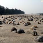 Manori beach3