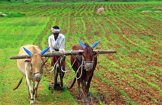 India_Farming-553x360